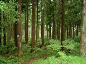 formation aux travaux forestiers - LEAP du Hainait et de l'Avesnois