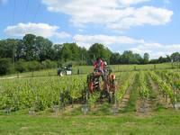CAPA vignes et vins - CFA d'Antibes